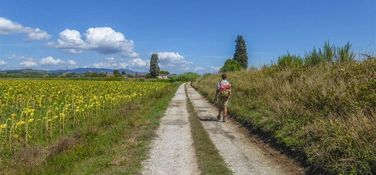 person hiking next to sunflowers