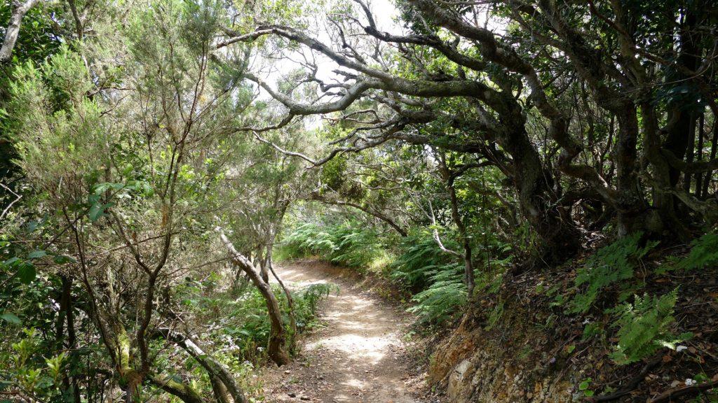 La Gomera island Garajonay National Park